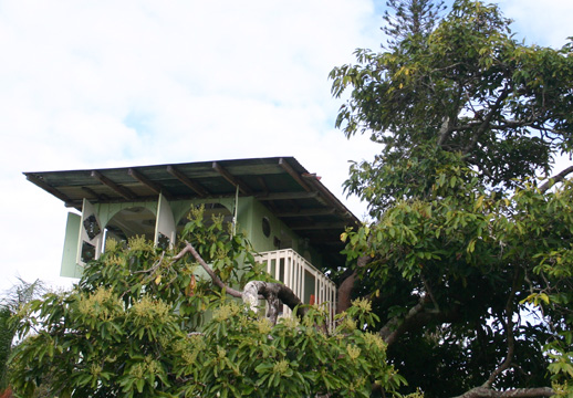 A tree house in Puna